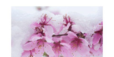 Smalti rosa per dare il benvenuto alla Primavera