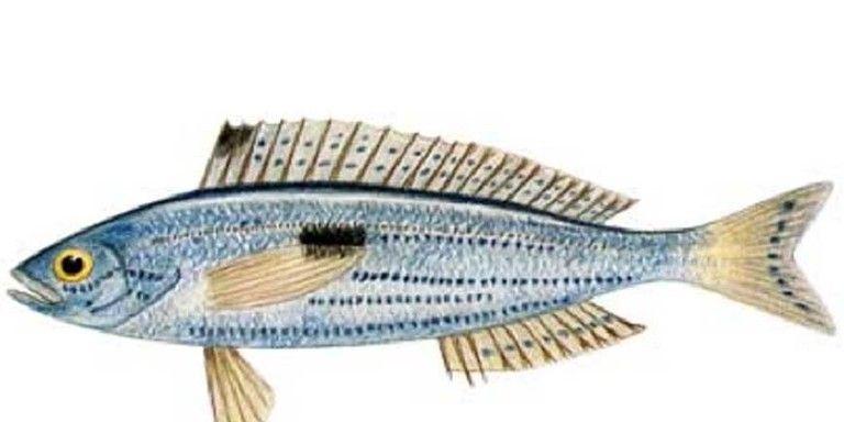ricette di dieta di pesce mediterraneo