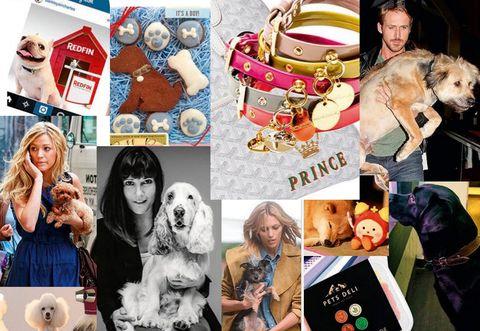 Human, Vertebrate, Carnivore, Dog breed, Dog, Collage, Fur, Companion dog, Toy, Sporting Group,