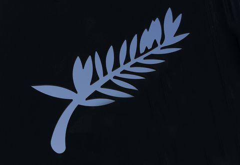 Leaf, Botany, Terrestrial plant, Darkness, Wing, Graphics, Fern,