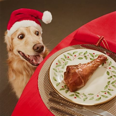 Dog, Dog breed, Food, Carnivore, Dishware, Ingredient, Sporting Group, Tableware, Plate, Meat,
