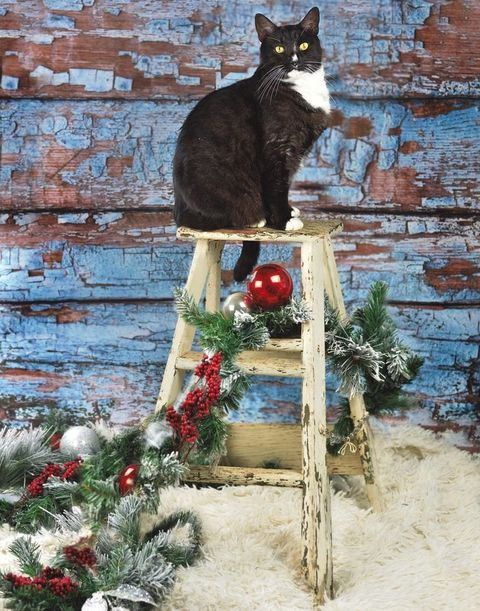 Small to medium-sized cats, Cat, Felidae, Carnivore, Brick, Whiskers, Christmas decoration, Brickwork, Christmas, Conifer,