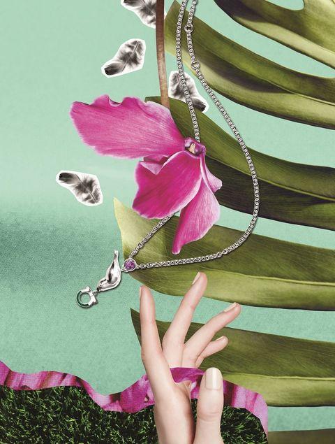 Finger, Petal, Flower, Pink, Magenta, Botany, Flowering plant, Terrestrial plant, Nail, Thumb,