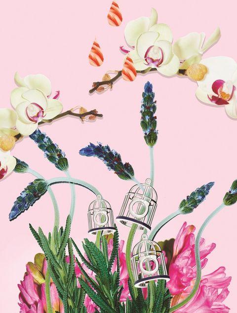 Flower, Petal, Pink, Flowering plant, Botany, Art, Terrestrial plant, Pedicel, Paint, Illustration,