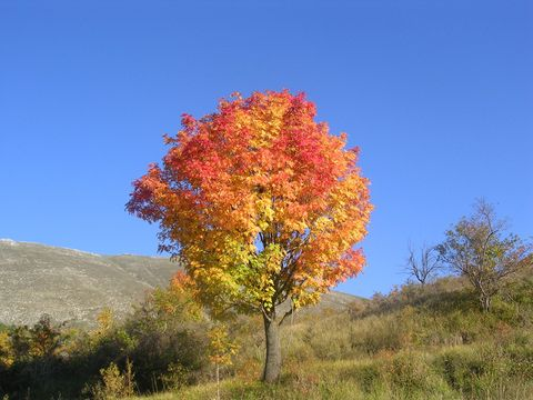 Vegetation, Leaf, Plant community, Woody plant, Ecoregion, Deciduous, Biome, Shrubland, Chaparral, Prairie,