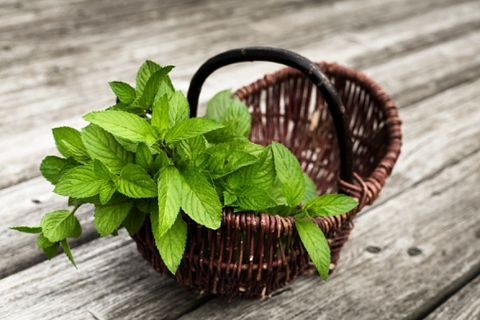 Wood, Leaf, Ingredient, Herb, Natural material, Still life photography, Coquelicot, Herbal, Mint,