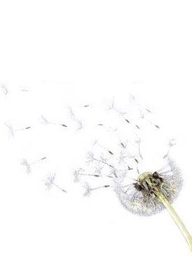 dandelion, Dandelion, Drawing, Herbaceous plant, Plant stem,