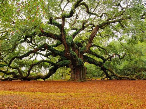 Branch, Deciduous, Leaf, Woody plant, Trunk, Autumn, Woodland,