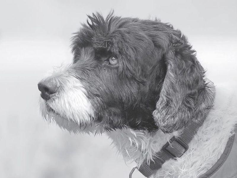 È solo un cane (dicono): il Conte più famoso di Facebook