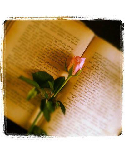 Petal, Leaf, Botany, Flowering plant, Paper, Paper product, Document, Plant stem, Still life photography, Artificial flower,