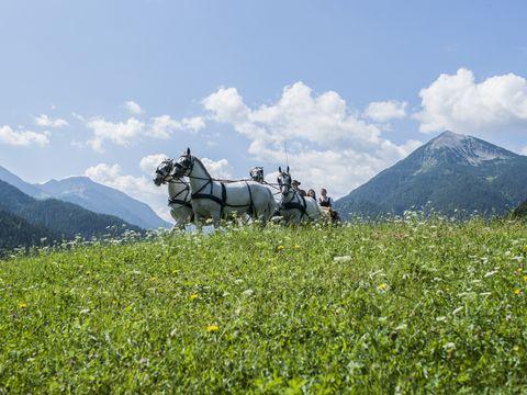 Mountainous landforms, Cloud, Working animal, Mountain range, Field, Highland, Hill, Ridge, Horse, Pasture,