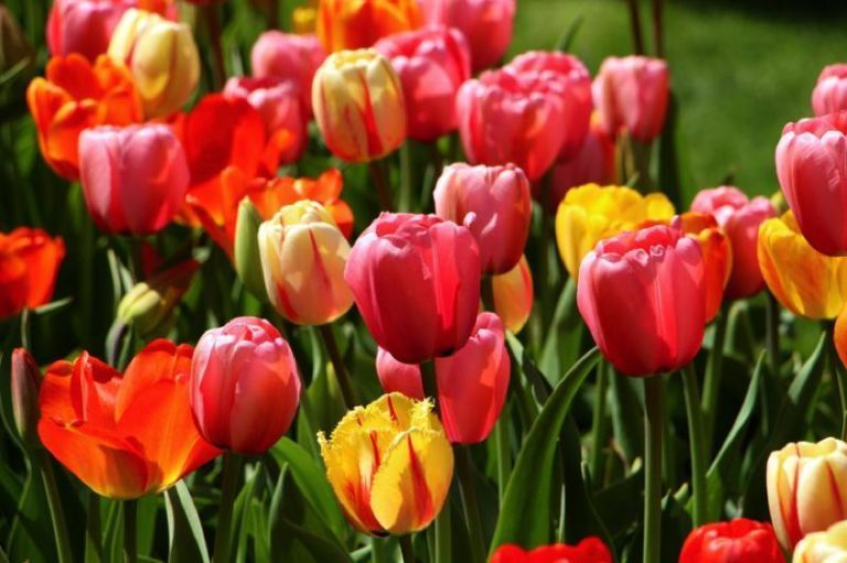 10 fiori da balcone invernali e primaverili facili da coltivare