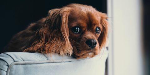 Cani Da Appartamento Quali Sono Le Razze Di Taglia Piccola E Media