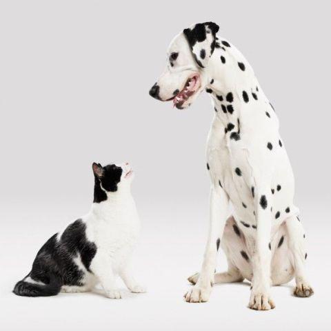 Regali per cani e gatti nel 2017