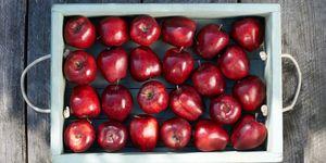 Full tray of freshly picked apples.