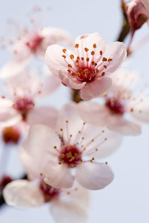 I fiori dalle proprietà curative che non conoscevi