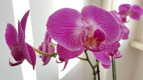 I 3 consigli segreti per regalare alla vostra delicatissima orchidea una vita perfetta