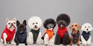 piumini-per-cani