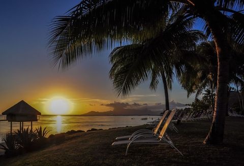Sky, Tree, Tropics, Palm tree, Sunset, Sunrise, Arecales, Morning, Horizon, Sea,