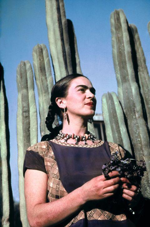 Saguaro, Cactus, Plant, San Pedro cactus, Flower, Hedgehog cactus,
