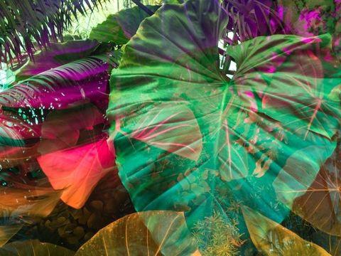 La natura rinasce e risveglia e le visioni green e sublimi di Karine Laval sono una visione stupenda di tutto ciò
