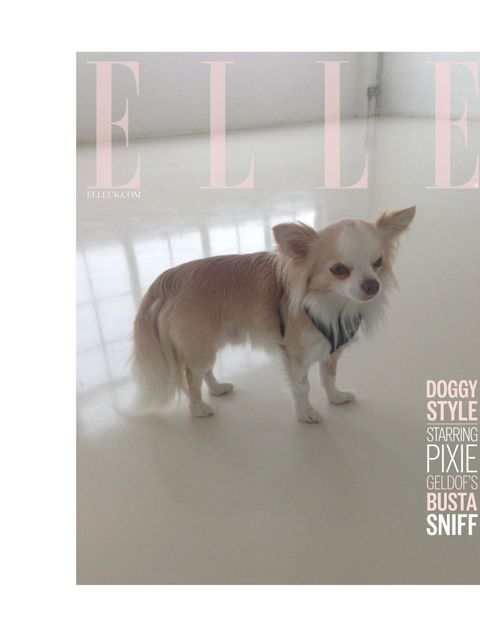 """<p>'Doggy style... Starring <a href=""""http://www.elleuk.com/star-style/celebrity-style-files/pixie-geldof"""">Pixie Geldof</a>'s Busta Sniff.' </p><p><a href=""""http://www.elleuk.com/elle-tv/cover-stars/elle-magazine/pixie-geldof-elle-behind-the-cover-video""""></"""