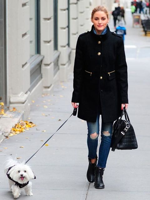 <p>Yes, the ripped jeans and military coat make for a winning winter outfit - but the real star of the show, here? That'll be Olivia's Maltese Terrier, Mr. Butler.</p>