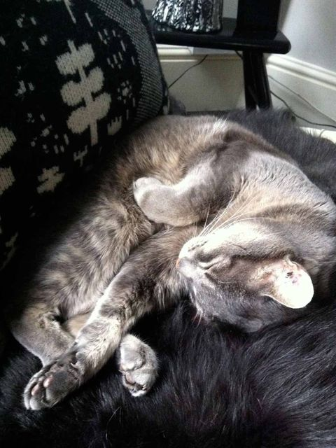 <p>The resident kitty takes a nap in the studio</p>