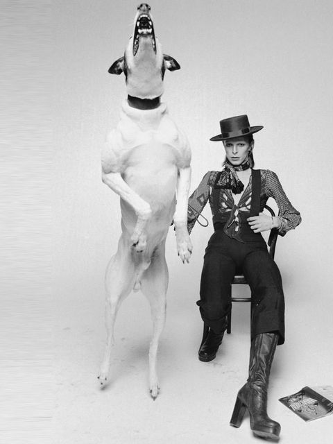 <p> The iconic photograph by Terry O'Neill for Bowie's 1974 album artwork 'Diamond Dogs'</p>