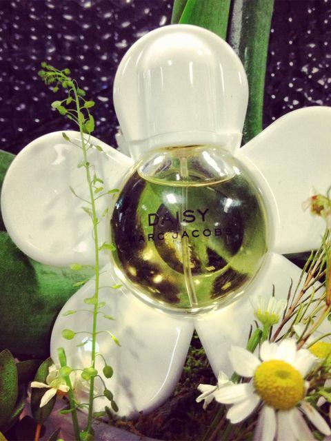 """<p><a href=""""http://www.johnlewis.com/marc-jacobs-daisy-eau-de-toilette/p12318"""">Marc Jacobs Daisy Petite Flower On The Go!</a></p>"""