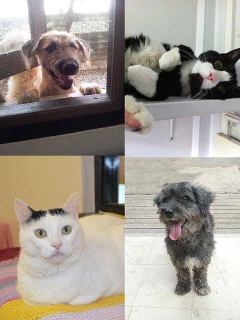 <p>We are featuring Dogs and Cats that are looking for their forever home.</p><p>If you can't adopt them why not brighten up their Christmas by making a donation to one of the three charities featured.</p><p>Pets Pyjamas will also donate £1 with each regi