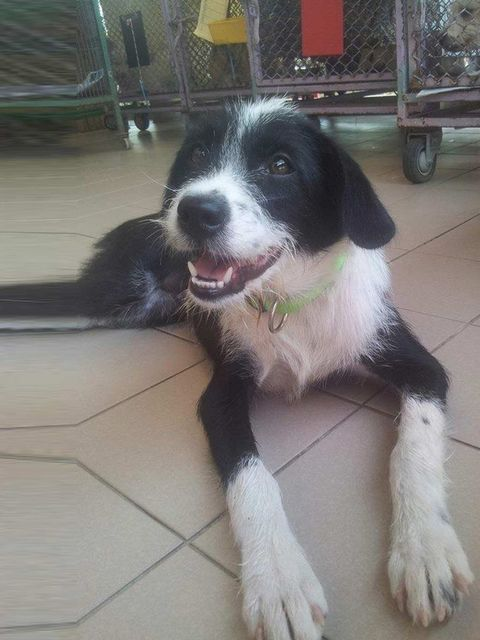 <p><strong>Name:</strong> Belle</p><p>A survivor of the dog meat trade and she was rescued from the Nakhon Phanom camp.</p><p>She is a lively, happy girl, full of energy and would make a great family pet. medium size, about 2 years old.</p><p>For adoption