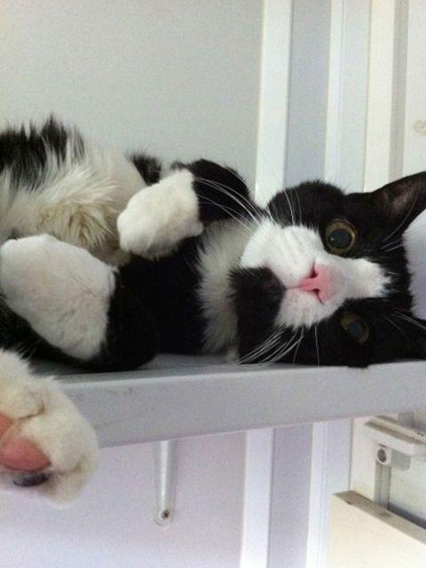 "<p><strong>Name:</strong> Baxter </p><p><a href=""http://themayhew.org/cats/baxter/"">http://themayhew.org/cats/baxter/</a></p><p><a href=""http://www.petspyjamas.com/elle-charity/"">http://www.petspyjamas.com/elle-charity/</a> </p>"