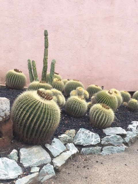 """<p><a href=""""https://instagram.com/p/xyFQDNt3iT/?taken-by=sarah_winward""""><strong>@sarah_winward</strong></a></p>  <p>Inside or out, we've always got a place for a cactus. Minimal watering needed.</p>"""