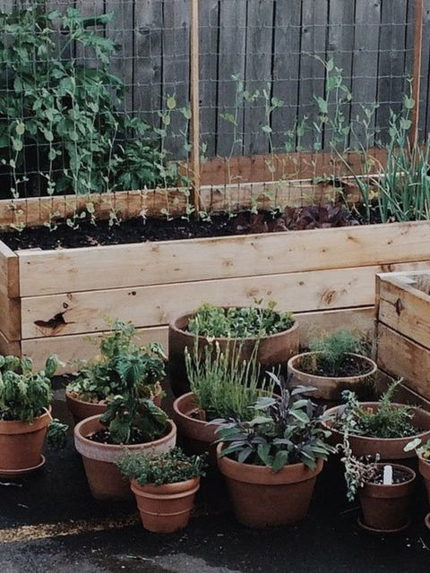 """<p><strong><a href=""""https://instagram.com/p/2e5oADy0iL/?taken-by=anne_parker"""">@anne_parker</a></strong></p>  <p>Wooden planters will give you the space to grow to the maximum.</p>"""