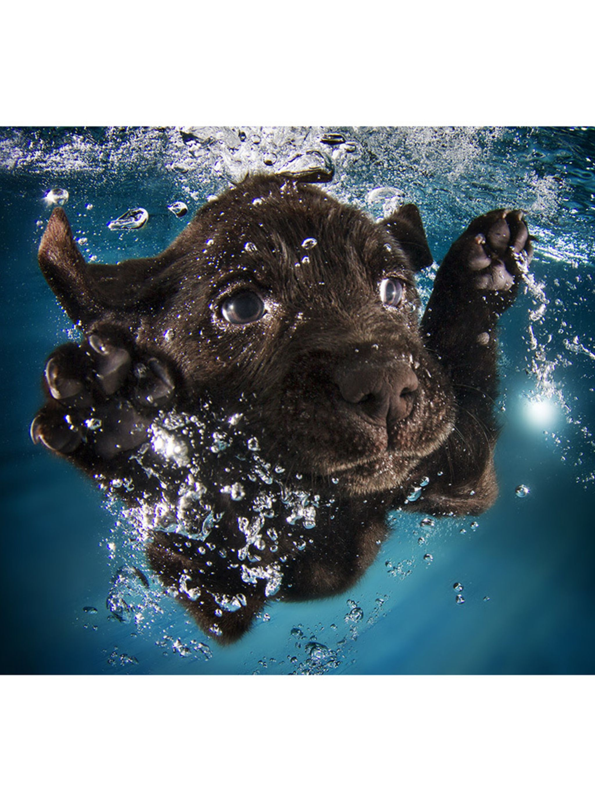 Photos: Cute Puppies swimming