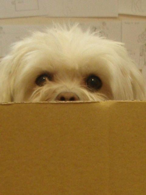 "<p>Daniella <a href=""http://www.elleuk.com/catwalk/collections/issa/"">Issa </a>Helayel's dog.</p>"