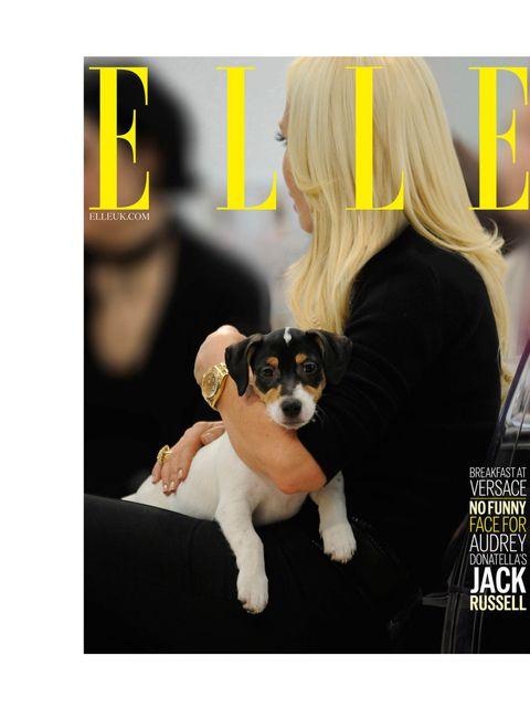 "<p>'Breakfast at <a href=""http://www.elleuk.com/catwalk/designer-a-z/versace/autumn-winter-2013"">Versace</a>. No funny face for Audrey, Donatella's jack russell.' </p><p><a href=""http://www.elleuk.com/elle-tv/cover-stars/elle-magazine/pixie-geldof-elle-be"