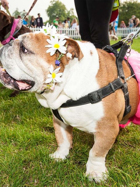 <p>EVENT: Pupaid</p>  <p>Dog shows just got stylish. That's right - forget crusty Crufts, because there's a way more fashionable (and fun) canine pageant in town. Held at London's Primrose Hill, this open-to-all charity event features categories including