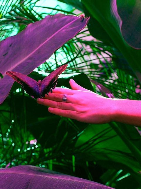 <p>POP-UP: Yoga With The Butterflies</p>  <p>Yoga. With butterflies. Uh huh, this is something that's happening. What's more – it's happening within a tropically heated, fuchsia-lit enclosure within the British Museum of Food on Broadway