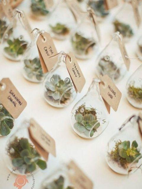 P Little Indoor Succulents A