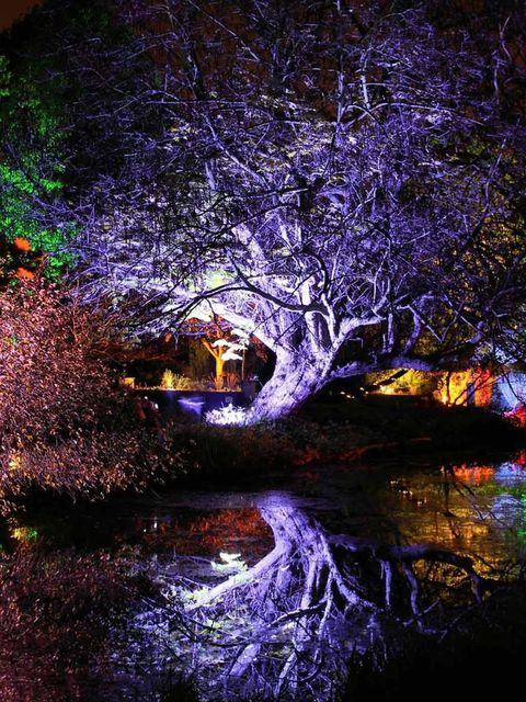 <p><strong>Visit now</strong></p><p>However old you are the idea of exploring an enchanted woodland has its appeals. Each weekend between 5 and 9pm until 8th December the gardens of Syon House, Brentford will be transformed i