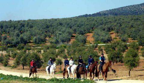 Hacienda Horses