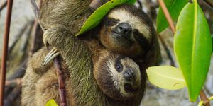 Sloths hugging | ELLE UK