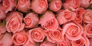 Pink roses | ELLE UK