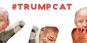 #TrumpCat
