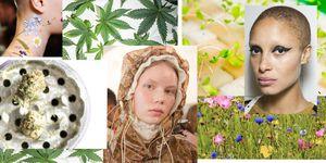 CBD Cannabis Skincare
