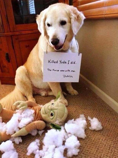 Dog breed, Vertebrate, Dog, Collar, Carnivore, Retriever, Toy, Stuffed toy, Labrador retriever, Plush,