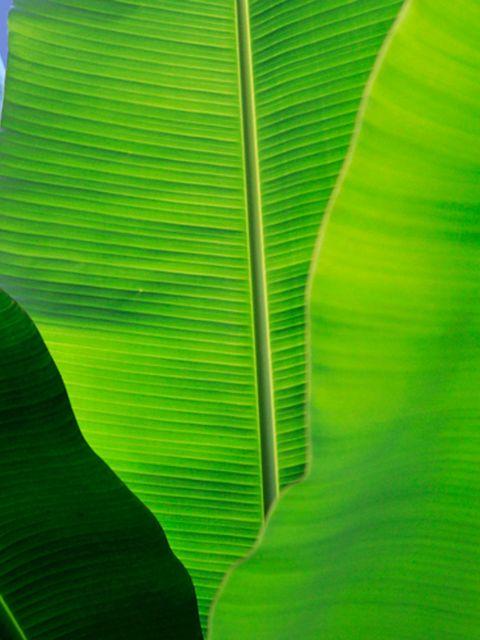 10 planten die de luchtvochtigheid thuis verhogen