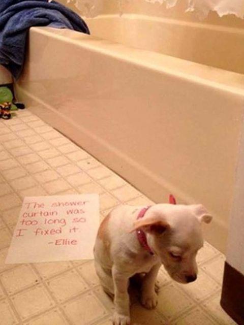 Dog breed, Dog, Vertebrate, Carnivore, Floor, Snout, Tile, Bathtub, Pet supply, Bathtub accessory,